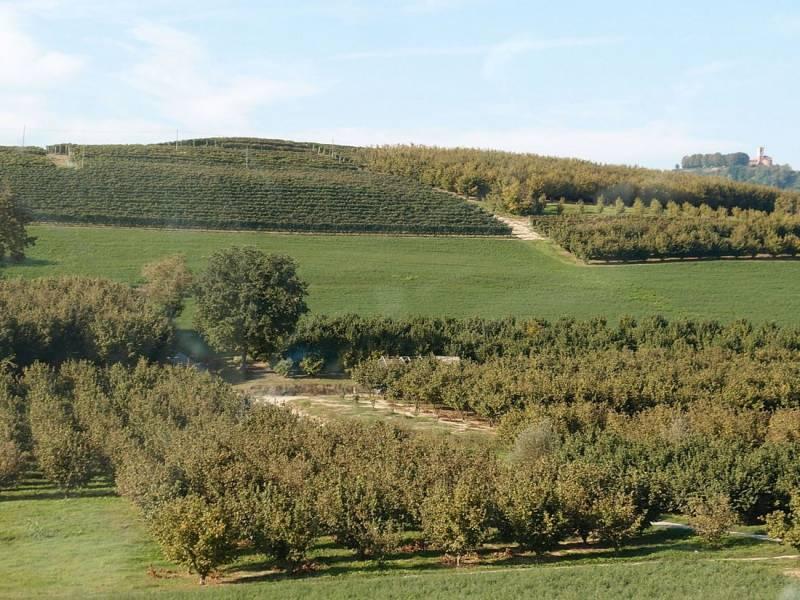 Piemont – oblast Barolo I.